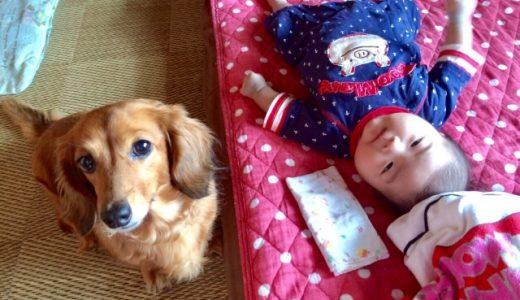犬 赤ちゃん