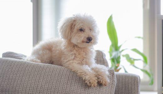 犬 ソファー